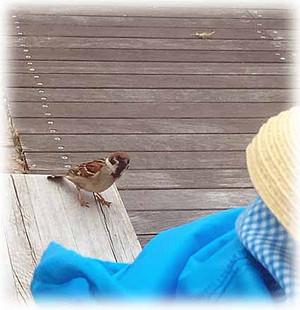 Sparrow180502