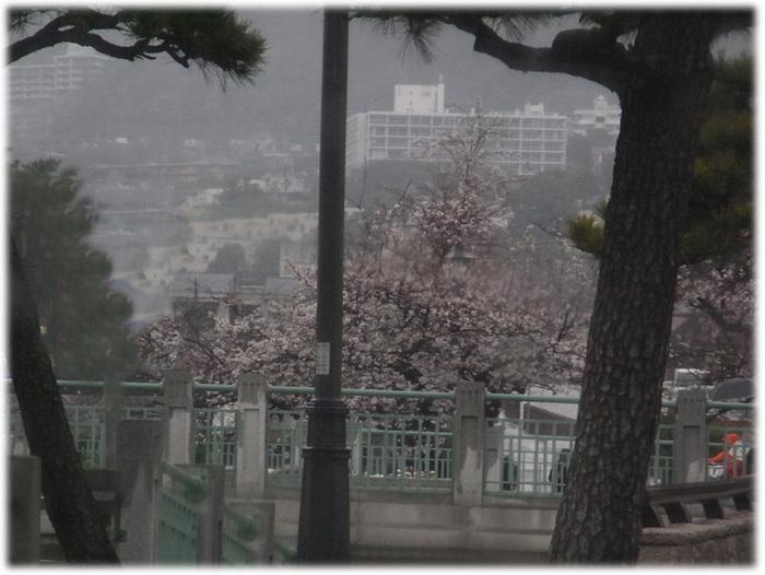Sakura2080330