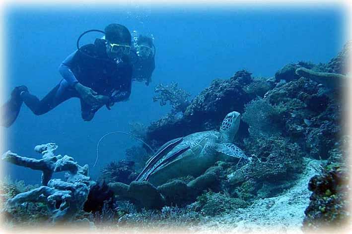 Turtle191124